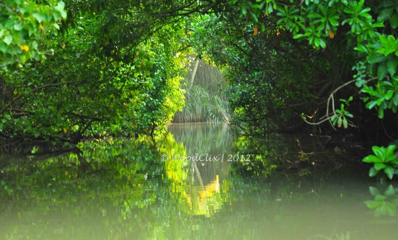 Trivandrum, (back waters)