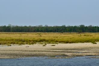 Manas river, grasslands and forest
