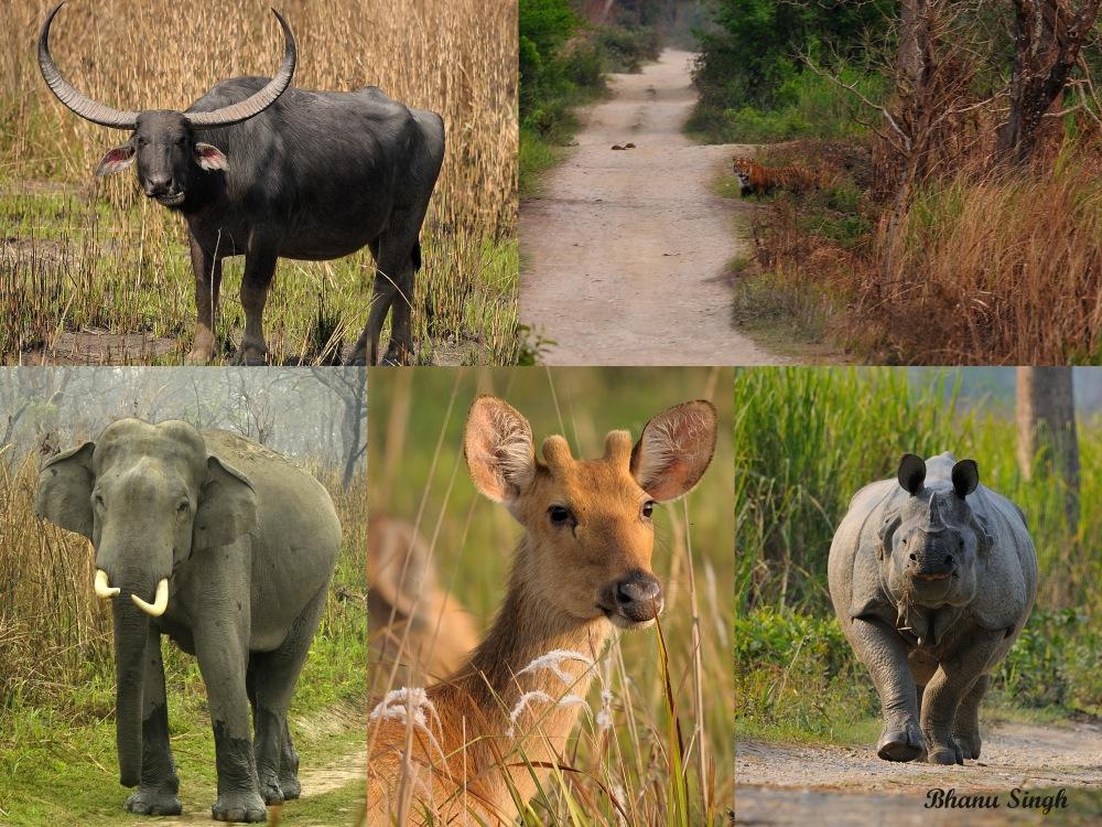 Big Five of Kaziranga